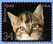 kittenstamp.jpg